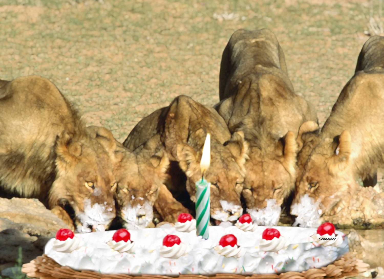 задача рихтовка фото день рождения лев время